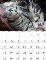 レオⅡカレンダー