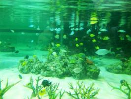 DVC00070 熱帯魚 珊瑚