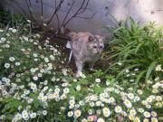 DVC00085  猫①