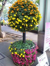 DVC00011  花 丸