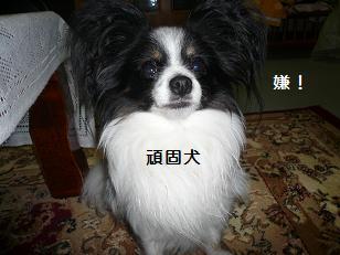 20103.jpg