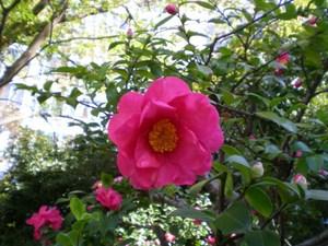 旧芝離宮庭園 036