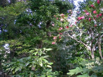 旧古河庭園 020