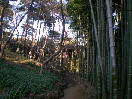 殿ヶ谷戸庭園 (32)