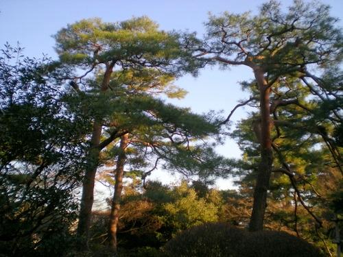 殿ヶ谷戸庭園 (64)