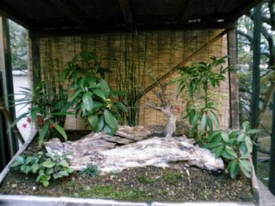 殿ヶ谷戸庭園 (6)