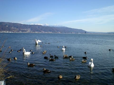 諏訪湖  (34)