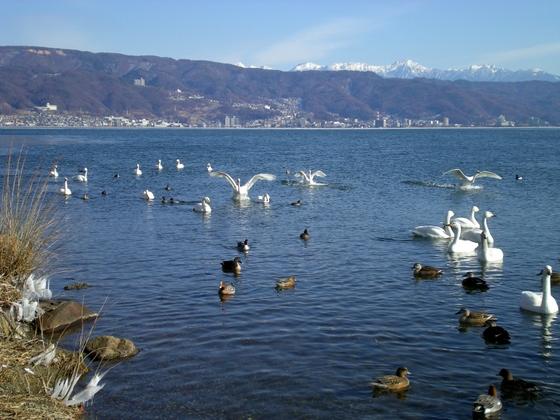 諏訪湖  (45)