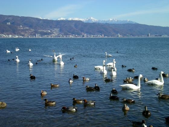 諏訪湖  (46)