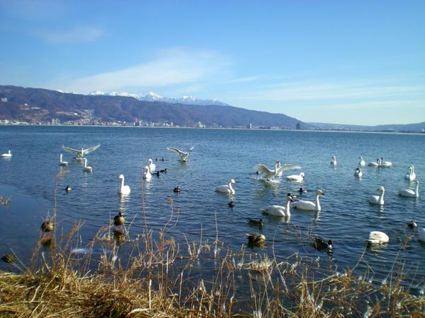 諏訪湖  (66)