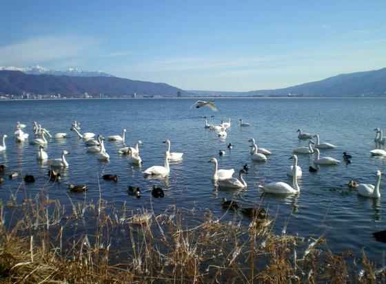 諏訪湖  (68)