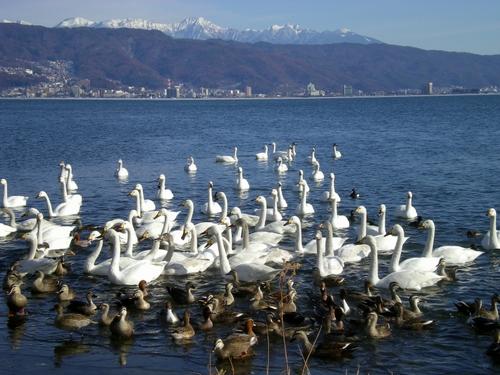 諏訪湖  (69)