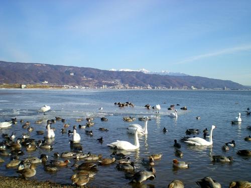 諏訪湖  (81)
