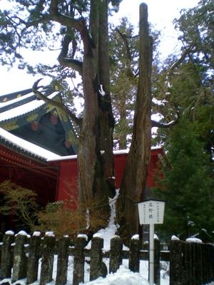 二荒山神社 (20)
