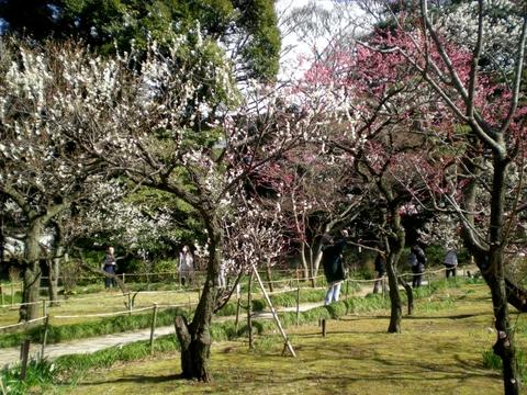 小石川後楽園 (26)
