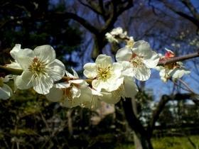 小石川後楽園 (32)