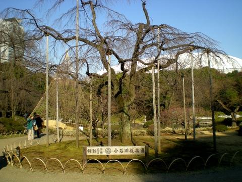 小石川後楽園 (125)