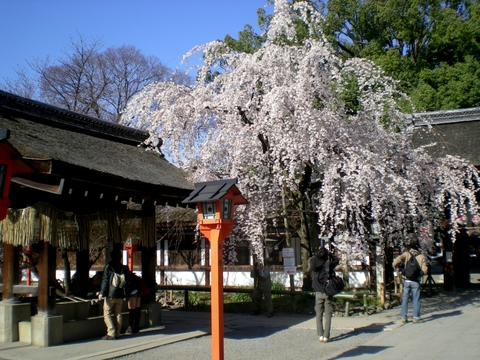 平野神社 (6)
