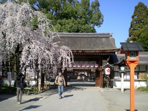 平野神社 (7)