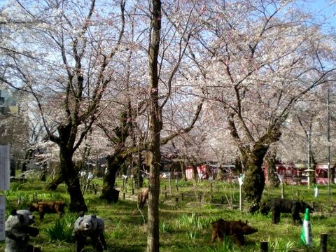 平野神社 (17)