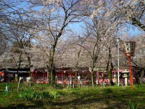 平野神社 (21)