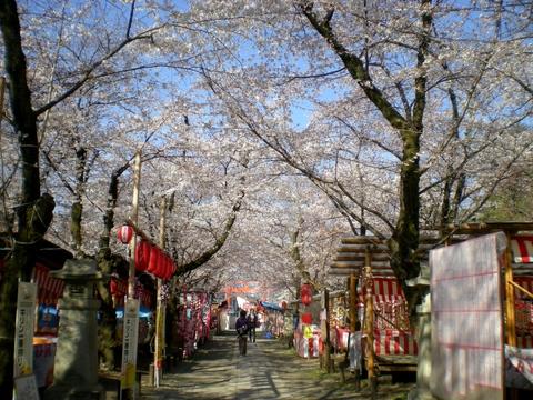 平野神社 (25)