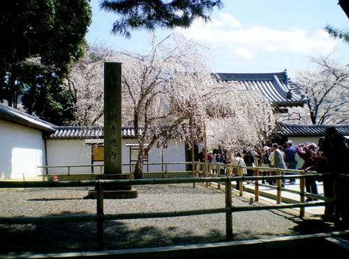 醍醐寺 (215)
