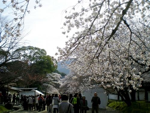 醍醐寺 (16)