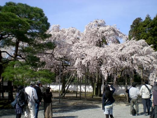 醍醐寺 (28)