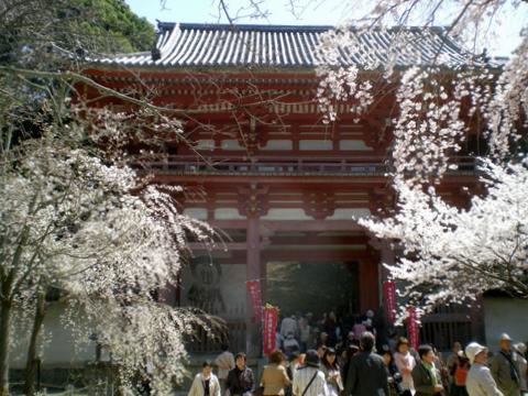 醍醐寺 (172)