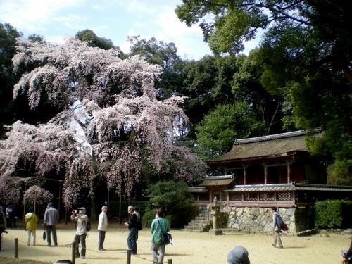 醍醐寺 (81)