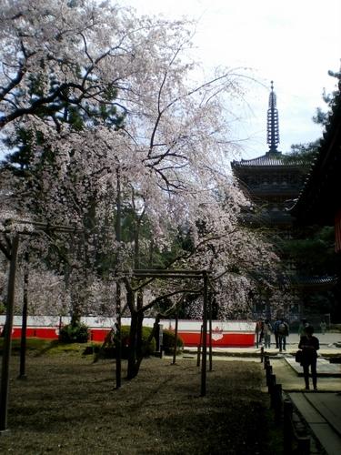 醍醐寺 (84)