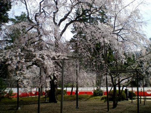 醍醐寺 (85)