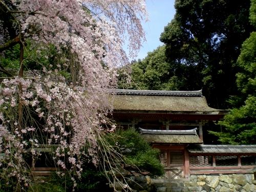 醍醐寺 (89)