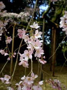 醍醐寺 (87)