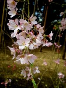醍醐寺 (88)