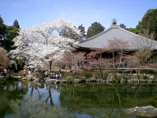 醍醐寺 (131)