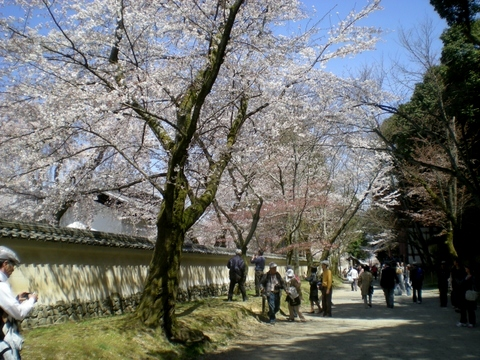 醍醐寺 (152)