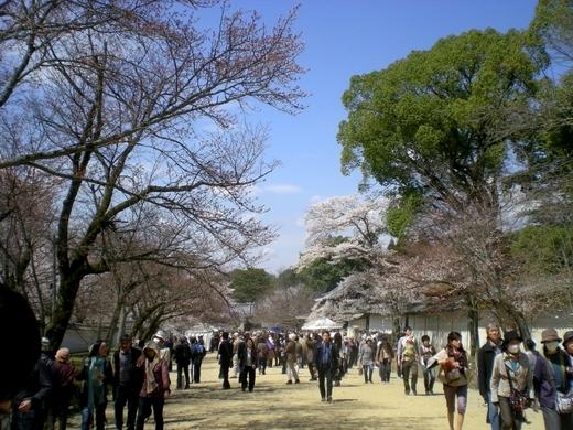 醍醐寺 (179)