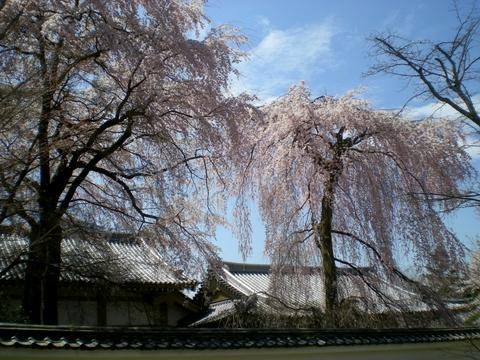 醍醐寺 (181)