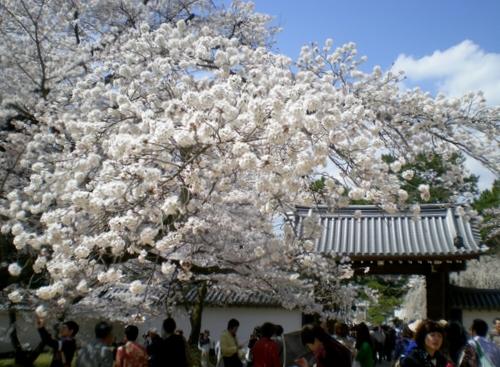 醍醐寺 (210)