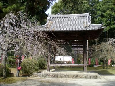 醍醐寺 (101)