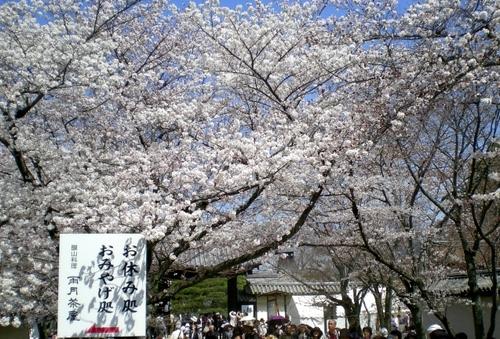 醍醐寺 (201)