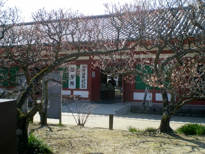 薬師寺 (6)