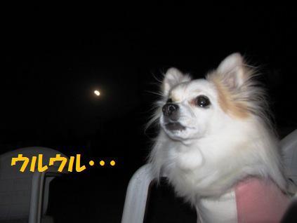 満月と利久、ウルウル。