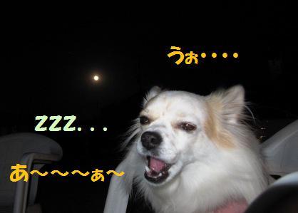 満月と利久、あくび。