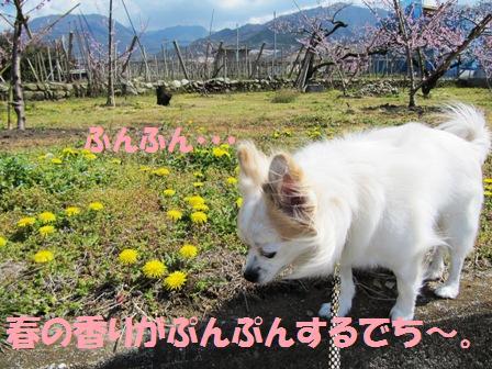 桃の花の香りもするなぁ~。