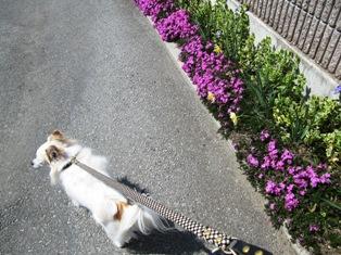 春のお散歩気持良し!
