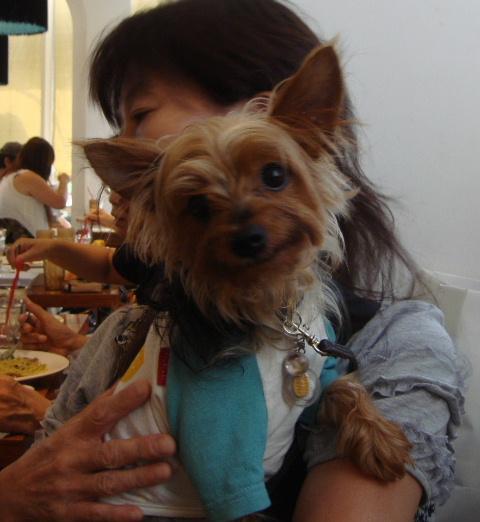 2009_0829豊洲0017