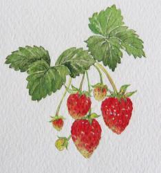 berry-hp.jpg